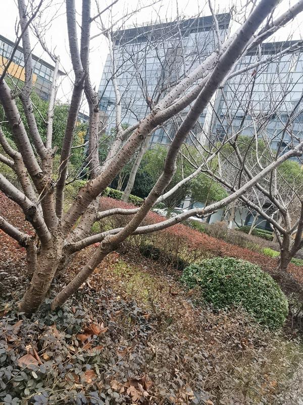 三八节踏春而至 月薪7000也能买房成家-连云港房产网
